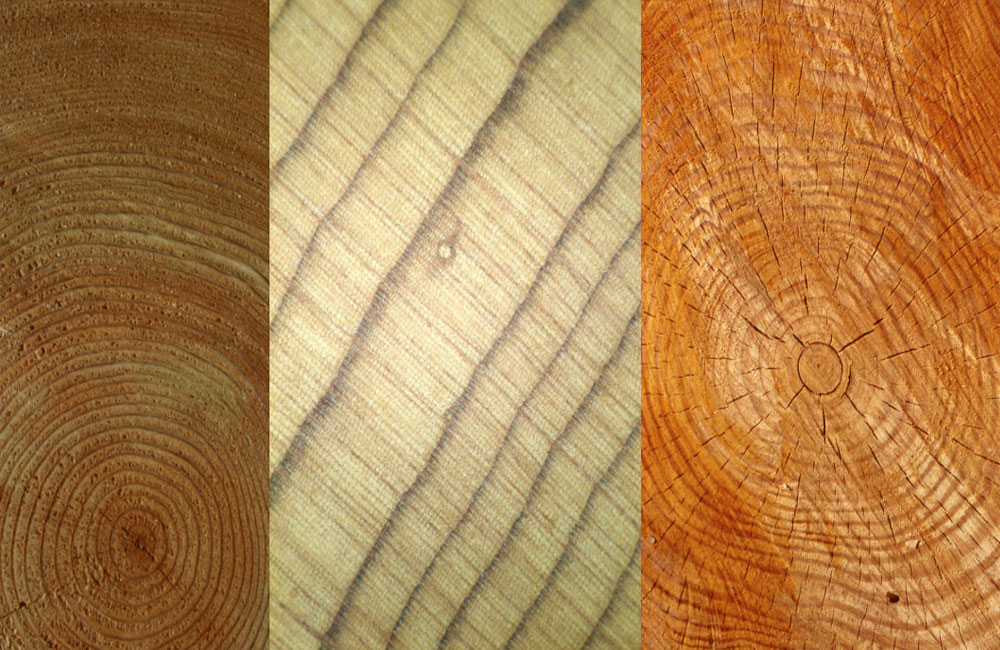Dendrochronology and Fine Violins